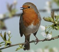 Турбота про птахів